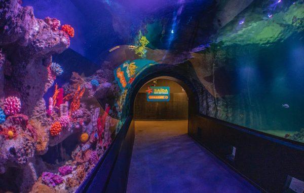 Oceanic Aquarium - Foto divulgação